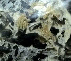 белые червячки под пленкой в грибном блоке