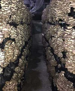 Вопросы и ответы по производству грибов
