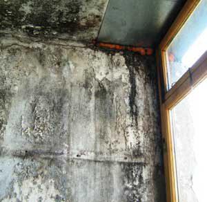 Плесень на стенах лоджии при выращивании вешенки