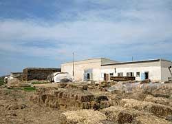 Ферма по производству вешенки