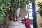rastenija_v_kadkah