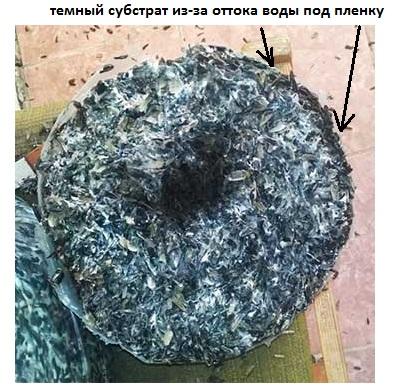 подгоревший мицелий в перегретом грибном блоке