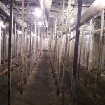 Ошибки вентиляции в грибном помещении для вешенки